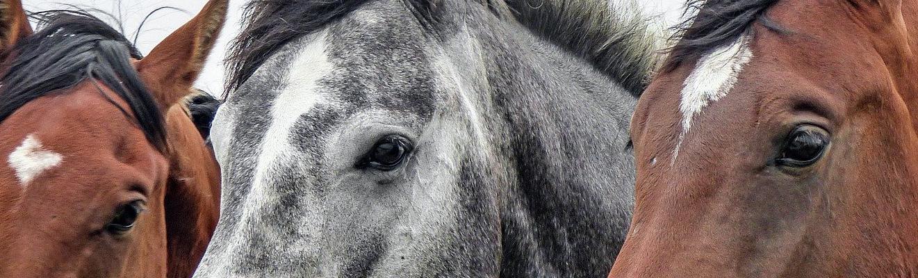 案例分析: 利用下一代物联网实现马匹的福祉和表现