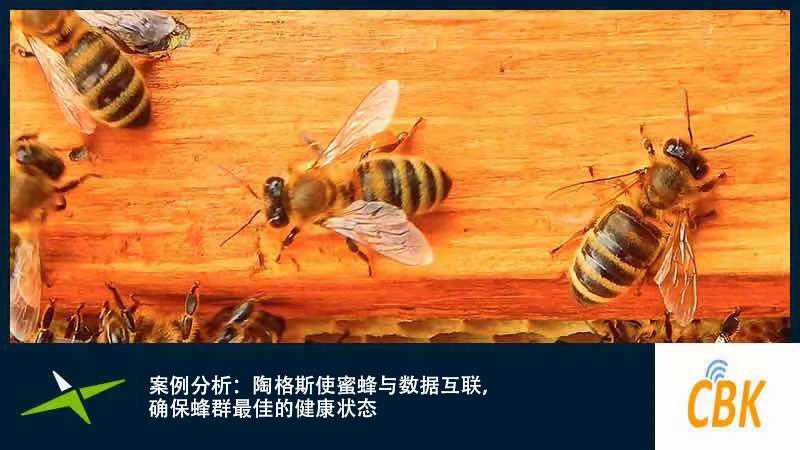 Image for 案例分析: 陶格斯使蜜蜂与数据互联,确保蜂群最佳的健康状态